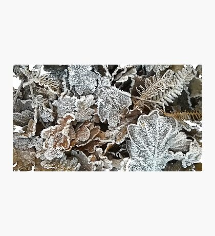 Frosted leaves - fluid edge Photographic Print