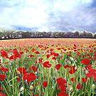 Poppies - Poppy Fields Art With Blue Sky by Poppy-Art