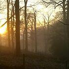 Golden sunset - foggy hillside by KMorral