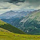 Elk And Longs Peak by Gregory J Summers