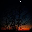 moonshine by Ronny Falkenstein