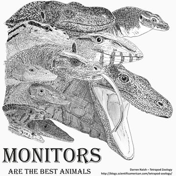 Monitors are the best animals by TetZoo