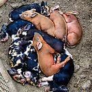 Pig Pile/Redmond by Richard Bozarth