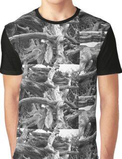 Natural Sculpture Graphic T-Shirt