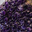 Purple Anyone?/Redmond by Richard Bozarth