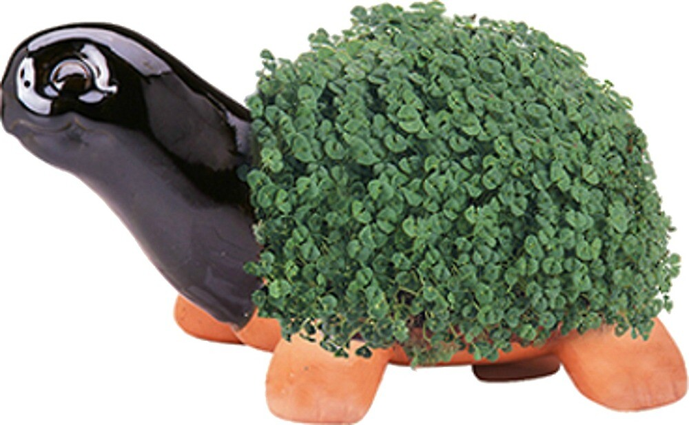 turtle chia pet by YO-spoon-leg