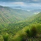 Moonlight Crag, Lamington National Park, Queensland, Australia by Michael Boniwell