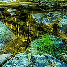 reflection of Nature/Fernview by Richard Bozarth