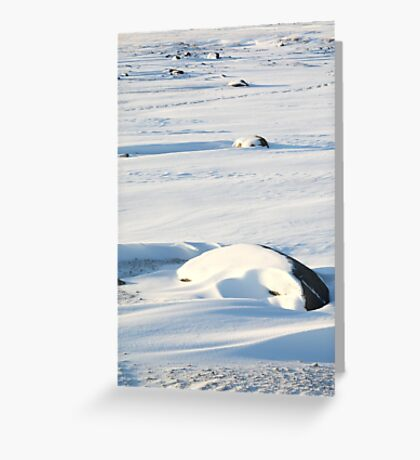 Early Morning on the Tundra #2, Churchill, Canada Greeting Card