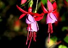 Red & Mauve Fuchsia by Carole-Anne