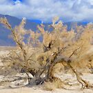 Desert Tree by Barbara  Brown