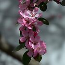Blossoming beauty by turningjapanese