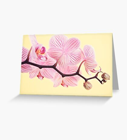 Pink phalaenopsis orchid blossoms Greeting Card
