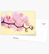 Pink phalaenopsis orchid blossoms Postcards