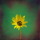 The yellow flower of my old friend by VictoriaHerrera