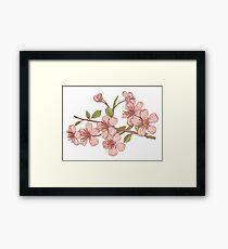 Pink sakura Framed Print