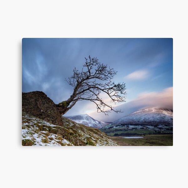 Low Rigg Lone Tree Canvas Print