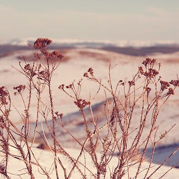 Winter vibe by dreamphotos