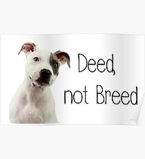 Deed not breed - staffordshire bull terrier Poster