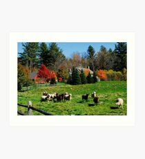 Sheep Farm in the Vermont Countryside Art Print
