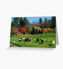 Sheep Farm in the Vermont Countryside Greeting Card