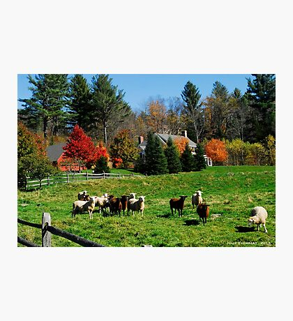Sheep Farm in the Vermont Countryside Photographic Print