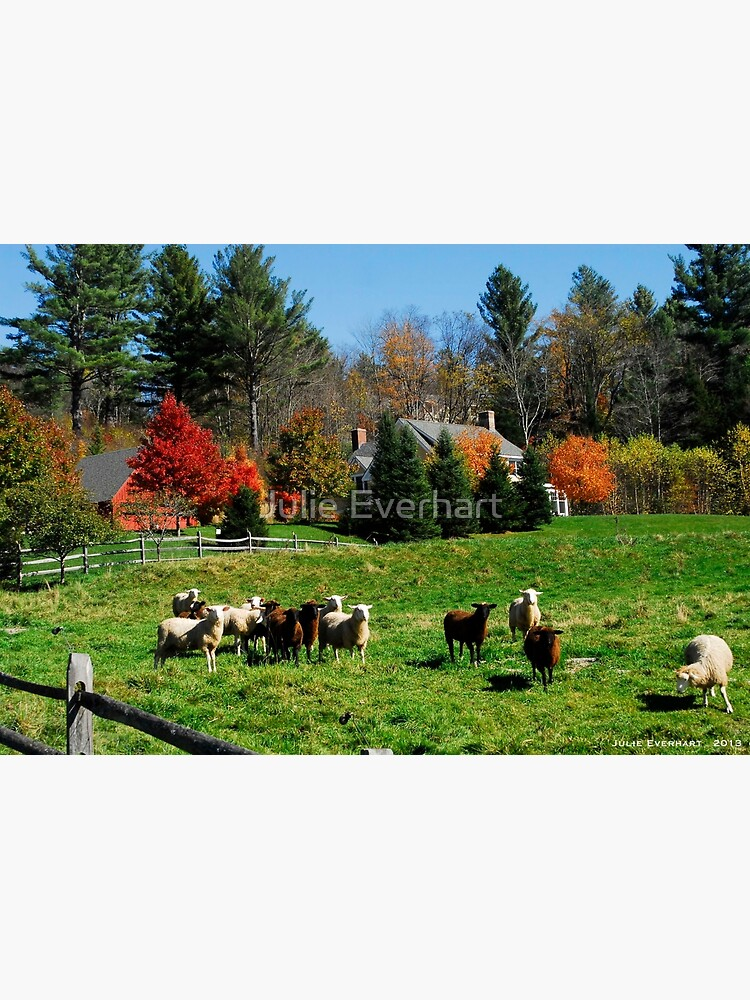 Sheep Farm in the Vermont Countryside by julev69
