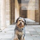 Pawsome: moments in the life of a rescued dog by Peta Santoro