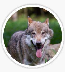 Canis Lupus Lupus III Sticker