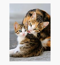 Mother Cat Loves Cute Kitten Photographic Print