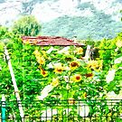 vegetable garden with sunflowers by Giuseppe Cocco