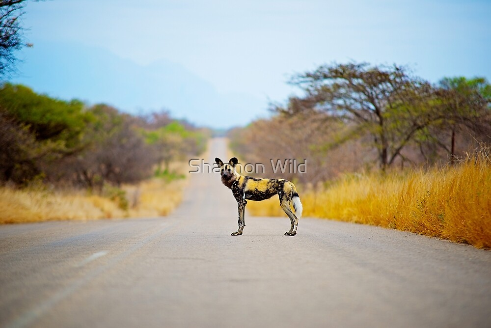 African Wild Dog by Shannon Wild