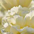 Creamy Tulip by Lindie Allen