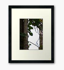 Love Trees Way Kambas 2012 Framed Print