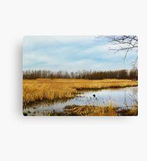 Sheldon Marsh - Marshland In Spring Canvas Print