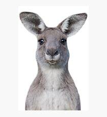 Cute baby kangaroo Photographic Print