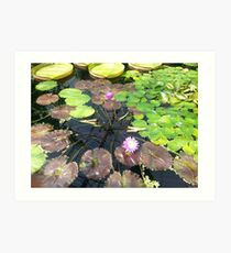 Lillies at Kew Art Print