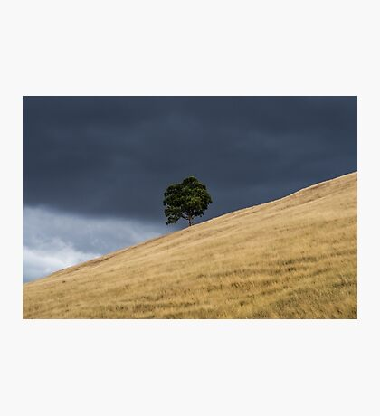 Tree on a hill Photographic Print