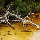 Tree in Dove Lake - Cradle Mountain by Lexa Harpell
