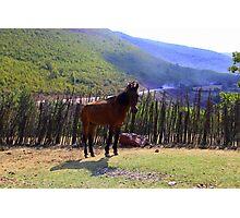 Wild Horse - Nature Photography Photographic Print
