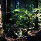 redwoods, rotorua by rina sjardin-thompson