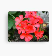 pretty small red flowers Canvas Print