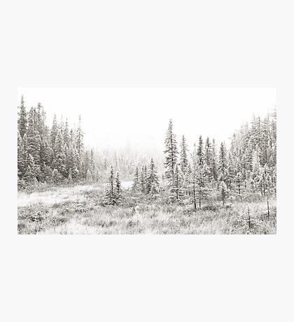 Algonquin Ice - Algonquin Park, Canada Photographic Print