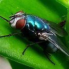 Fly : Blue Bottle by AnnDixon