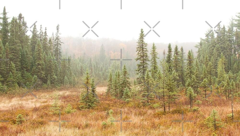 Fog in Algonquin Park, Canada by Jim Cumming
