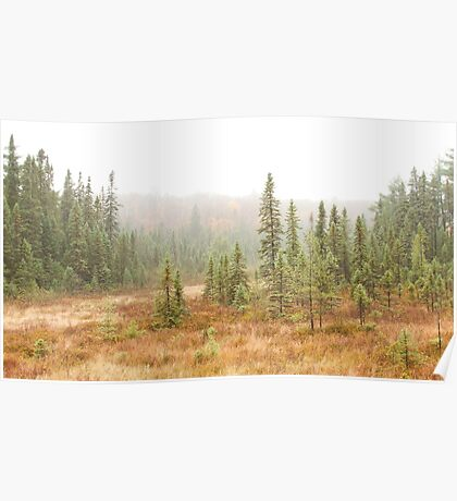 Fog in Algonquin Park, Canada Poster
