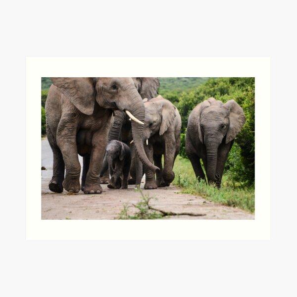 A Family of elephants Art Print