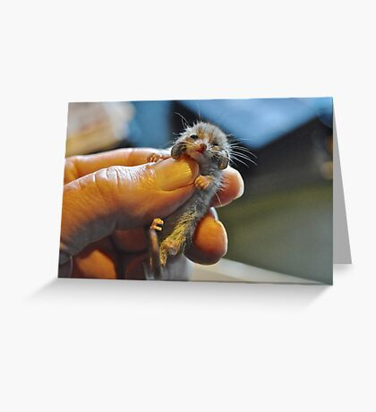 I am almost as big a your fingernail Greeting Card