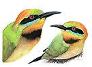 Rainbow Bee-eaters by Meaghan Roberts