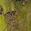 The texture of tree bark with lots of ladybirds by flashcompact